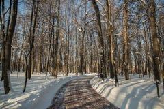 Árvores e estrada no inverno em um dia claro no parque Tsaritsyno Imagem de Stock Royalty Free