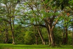 Árvores e filiais Imagem de Stock