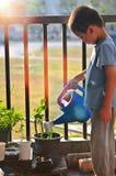Árvores e flores molhando do rapaz pequeno na manhã fotografia de stock royalty free