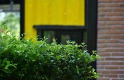 Árvores e flores plantadas como uma cerca na frente da casa imagem de stock royalty free