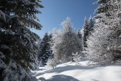Árvores e floresta em um dia de inverno imagens de stock