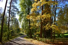 Árvores e folha amarelas e verdes imagem de stock