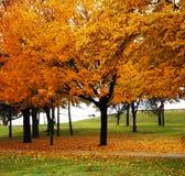 Árvores e folhas fotos de stock
