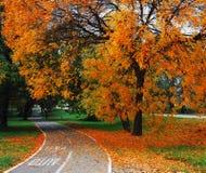 Árvores e folhas Foto de Stock