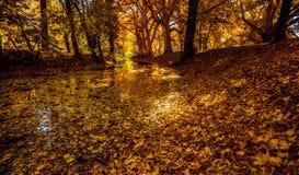 Árvores e folhas Foto de Stock Royalty Free