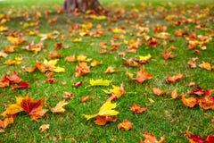 Árvores e folhas Fotografia de Stock