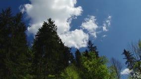 Árvores e folhas contra o céu azul A natureza começa a florescer Mola filme