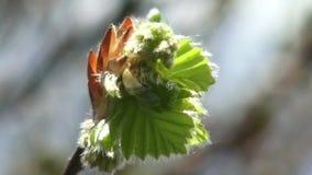 Árvores e folhas contra o céu azul A natureza começa a florescer Mola vídeos de arquivo
