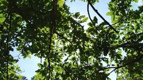 Árvores e folhas contra o céu azul A natureza começa a florescer Mola video estoque
