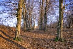 Árvores e folhas em uma aleia Imagens de Stock Royalty Free