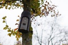 árvores e folhas nevoentas do outono imagens de stock