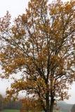 árvores e folhas nevoentas do outono imagem de stock royalty free