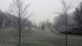 Árvores e grama congeladas em uma manhã de congelação enevoada em Amsterdão fotos de stock