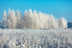 Árvores e grama geadas contra um céu azul Imagens de Stock