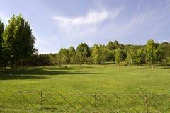 Árvores e grama verdes no autum Fotografia de Stock