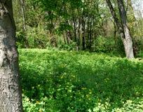 Árvores e grama verdes no parque do jardim fotos de stock