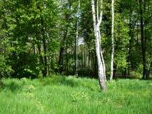 Árvores e grama verdes no parque do jardim imagens de stock royalty free
