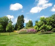Árvores e gramado Foto de Stock Royalty Free