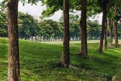 Árvores e gramado da paisagem em um parque Imagens de Stock Royalty Free