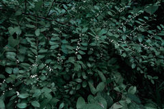 Árvores e hortaliças verdes da folha Imagens de Stock Royalty Free