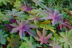 Árvores e hortaliças verdes da folha Imagem de Stock Royalty Free