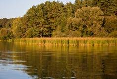 Árvores e lago Imagem de Stock Royalty Free