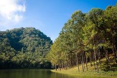 Árvores e lago de pinho Imagem de Stock