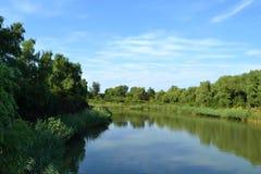 Árvores e lago verdes Imagem de Stock