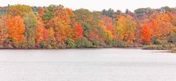 Árvores e lagoa da queda fotografia de stock