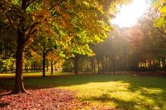 Impressões do outono Fotografia de Stock Royalty Free