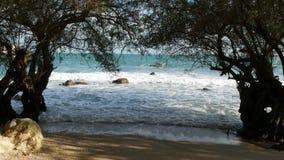 Árvores e mar bonito Mar azul majestoso que rippling atrás das árvores de Ko Phangan no dia ensolarado em Tailândia exotic video estoque