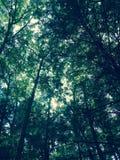 Árvores e mim Fotos de Stock Royalty Free