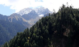 Árvores e montanha Foto de Stock Royalty Free