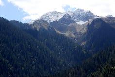 Árvores e montanha Imagem de Stock