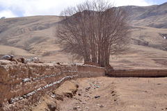 Árvores e montanhas Foto de Stock Royalty Free