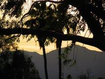 Árvores e montanhas Imagem de Stock Royalty Free