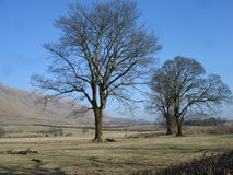 Árvores e montes Fotografia de Stock