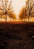 Árvores e névoa no outono imagem de stock