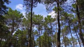 Árvores e palmas verdes da selva contra o céu azul e o sol de brilho vídeos de arquivo