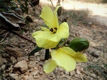 Árvores e perennials das flores vários Fotografia de Stock