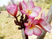 Árvores e perennials das flores vários Foto de Stock Royalty Free