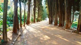 Árvores e plantas foto de stock royalty free