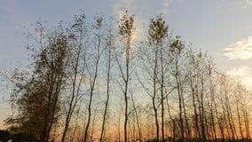 Árvores e por do sol do inverno Imagens de Stock Royalty Free