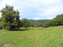 Árvores e prado Fotos de Stock Royalty Free