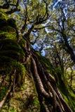 Árvores e raizes imagens de stock royalty free
