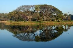 Árvores e reflexão Imagens de Stock