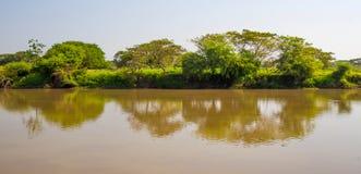 Árvores e rio Foto de Stock Royalty Free