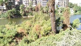 Árvores e rio verdes do Cairo em Egito fotos de stock