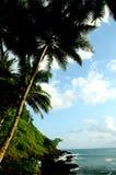 Árvores e rocha fotografia de stock royalty free