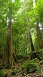 Árvores e rochas fotografia de stock